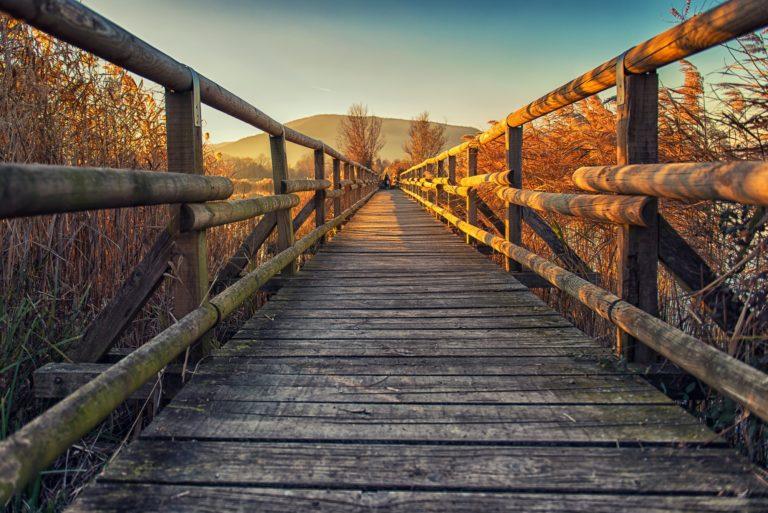 Wood bridge over peatlands